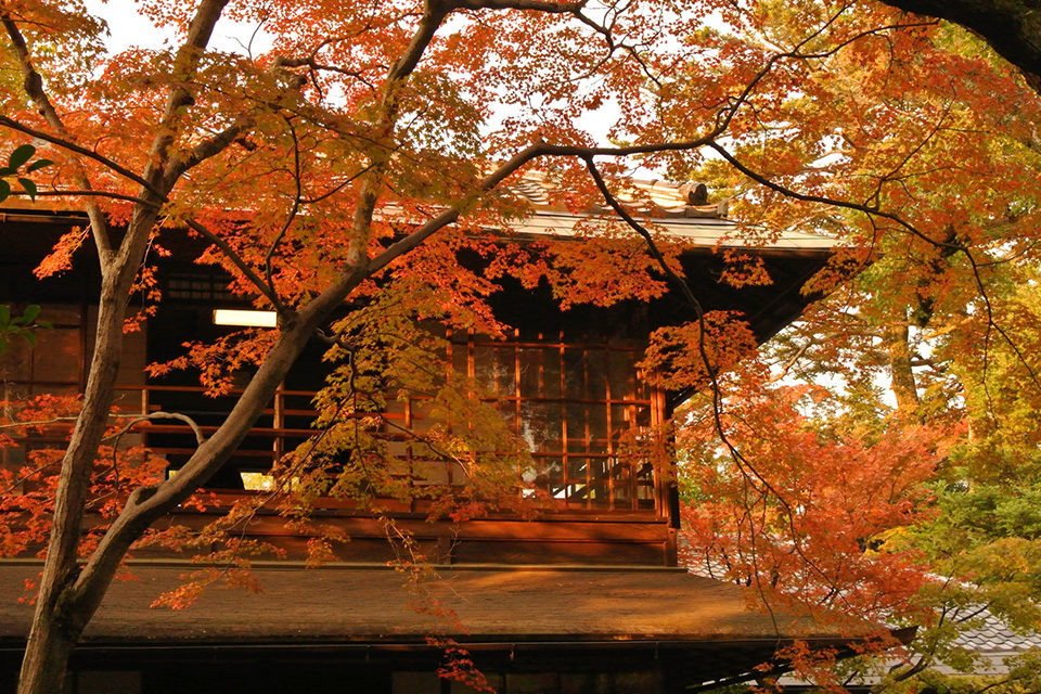 京都從早上開始就能觀賞楓葉的12處景點
