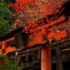 「伏見稻荷大社」看楓葉吧!