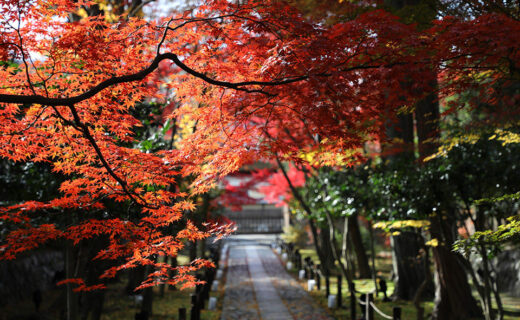 京都的楓葉名勝排行榜27選「2020年」
