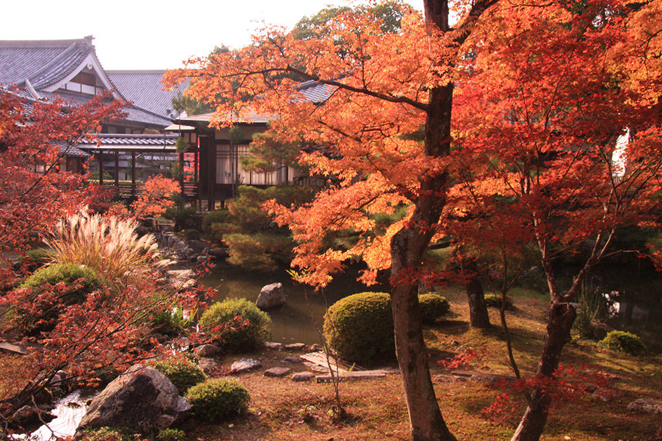 下雨天也能玩得開心的京都楓葉景點是