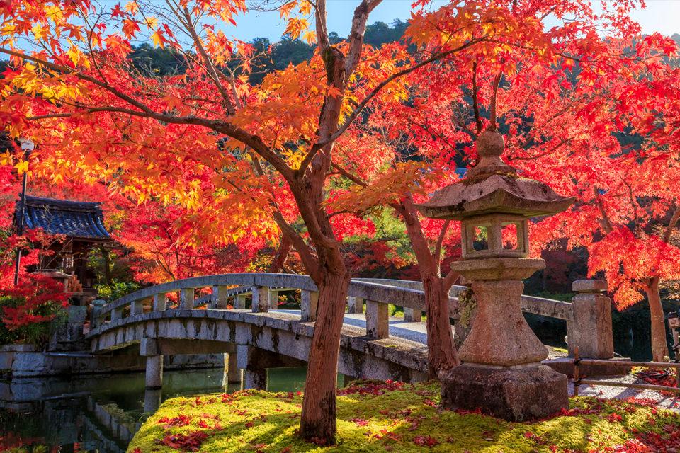 南禪寺的楓葉資訊