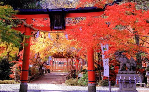 如果想盡情欣賞京都楓葉的話,推薦去神社。