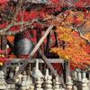 京都的楓葉12月最美