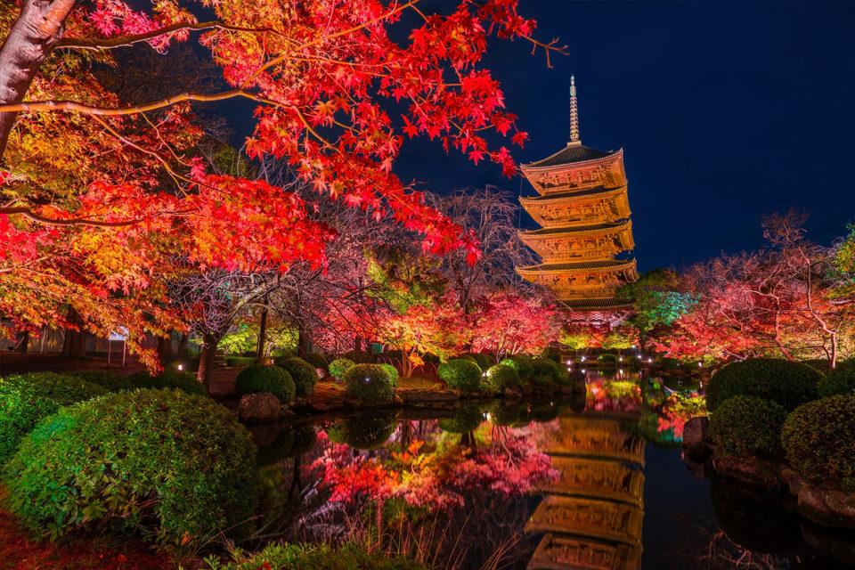 如果要欣賞京都楓葉的話就去東寺。
