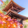 京都的春天