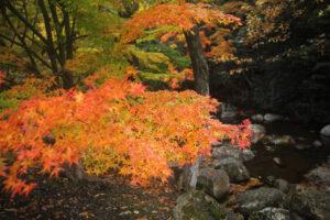 在京都南丹市賞楓葉!介紹絕對想去的「RURI溪」的推薦楓葉景點和享受方法!