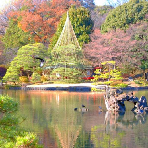 祇園的圓山公園就是這種地方的代表。