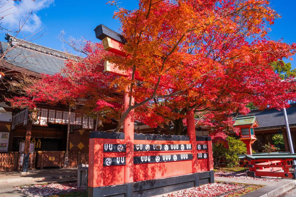 觀光季節比起容易被認為是擁擠地方的右京區,會給您帶來清爽舒適的景點