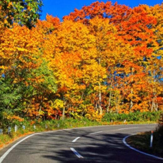 嵐山-高雄公園大道