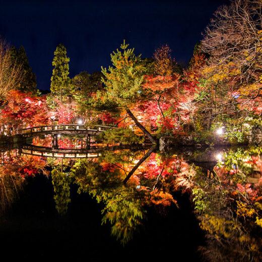 夜晚觀賞楓葉是京都的永觀堂!