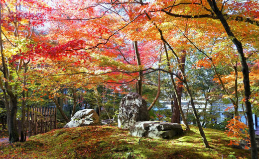 阪急沿線有很多楓葉名勝!