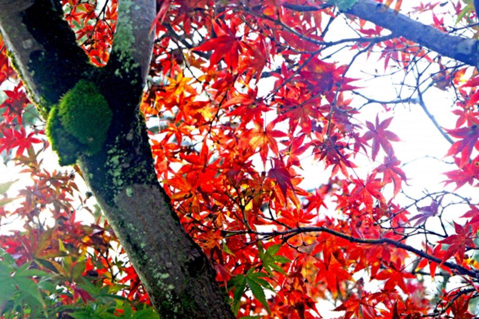 介紹可以悠閒觀光的京都・清閒寺!