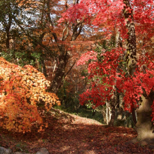 京都楓葉的鮮為人知的觀光景點?!