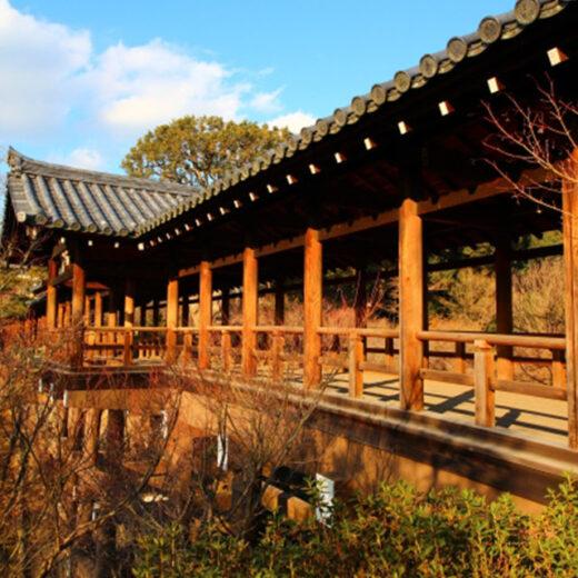 京都首屈一指的楓葉名勝「東福寺」的楓葉