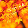 在樹木的變化中感受秋天的話,京都府立植物園。