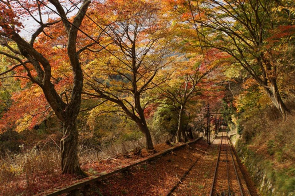 如果在京都享受楓葉的話,睿山電車的「楓葉隧道」