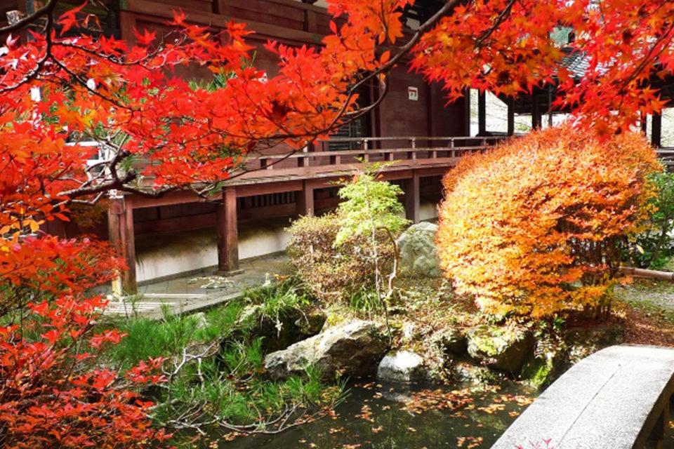京都・山科毘沙門堂欣賞楓葉!
