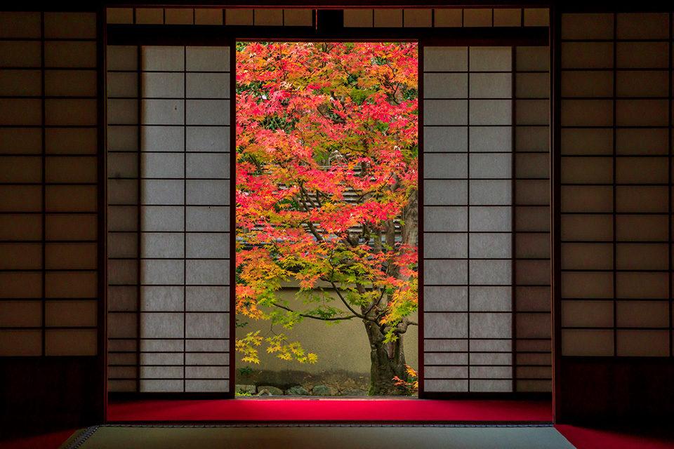 介紹京都的畫框景點!!