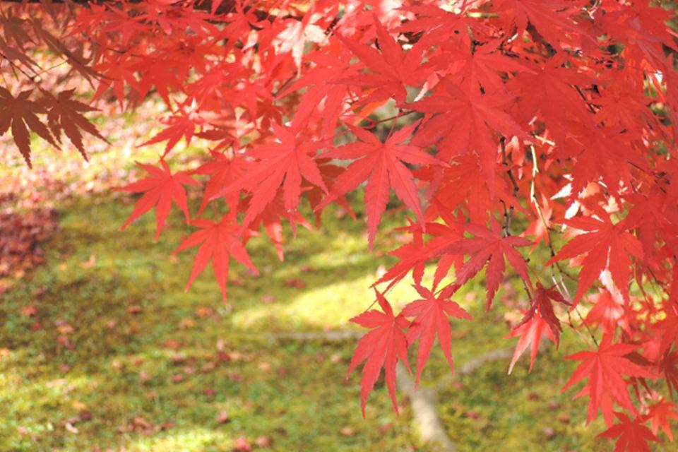 觀賞楓葉的鮮為人知的好去處!