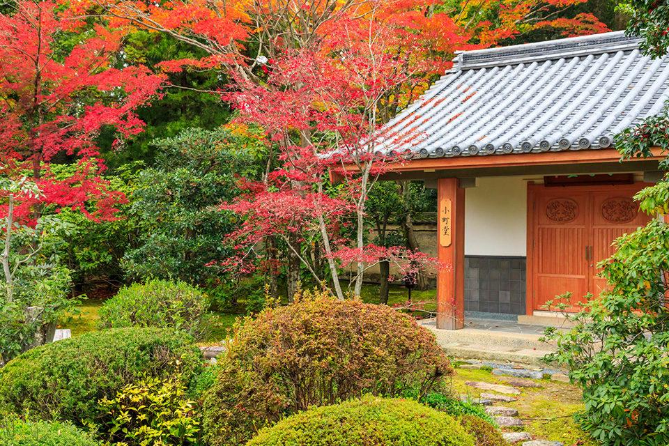 與小野小町有淵源的寺廟·「隨心院」的楓葉格外美麗!