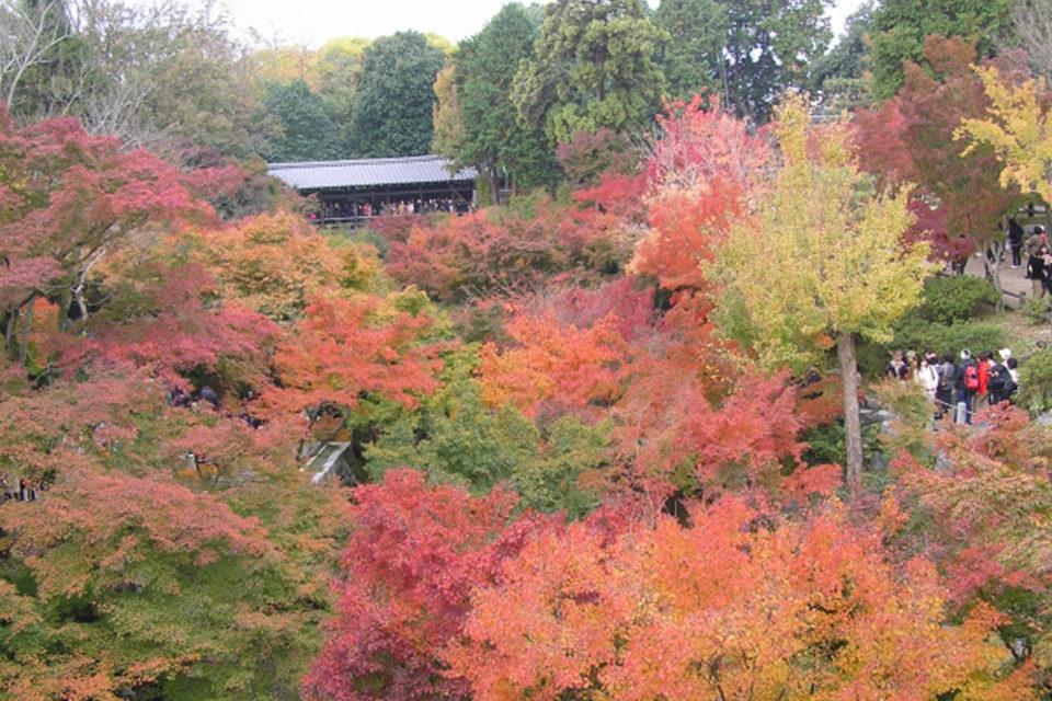 如果想看京都的楓葉的話,推薦泉湧寺。