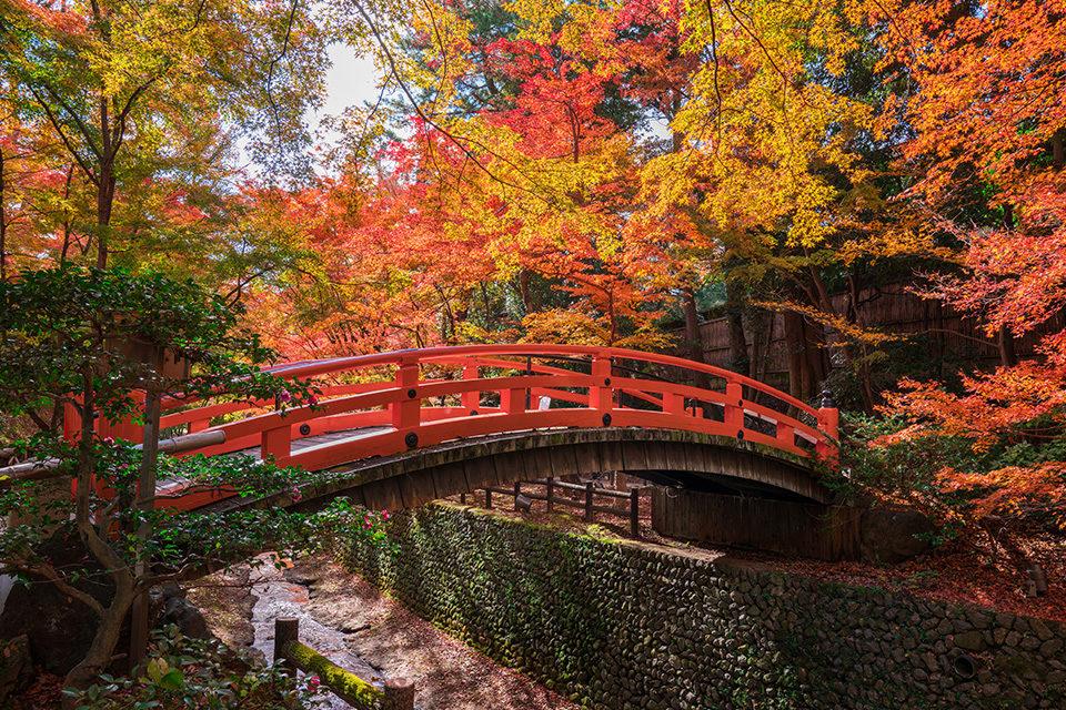 京都的楓葉區意外的推薦中心部
