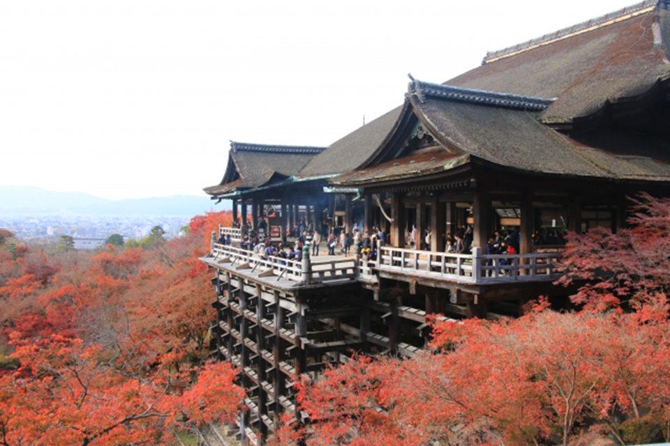 美麗的京都楓葉和瀑布的聲音一起享受!