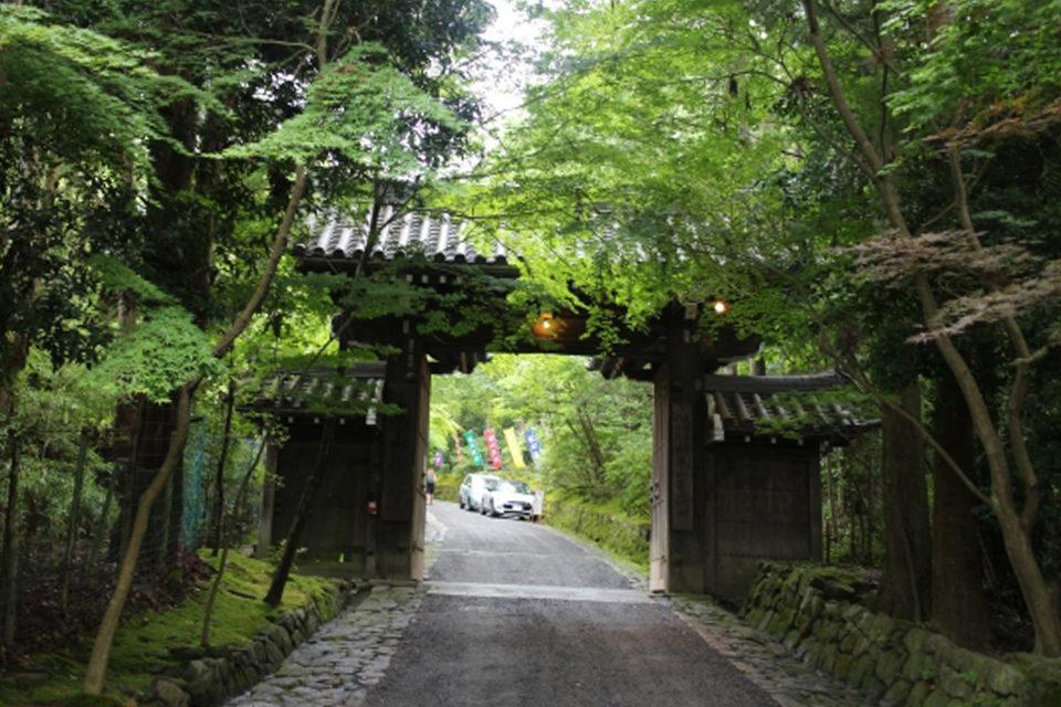 京都的楓葉和能量景點巡遊