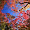 秋天的特別參觀!