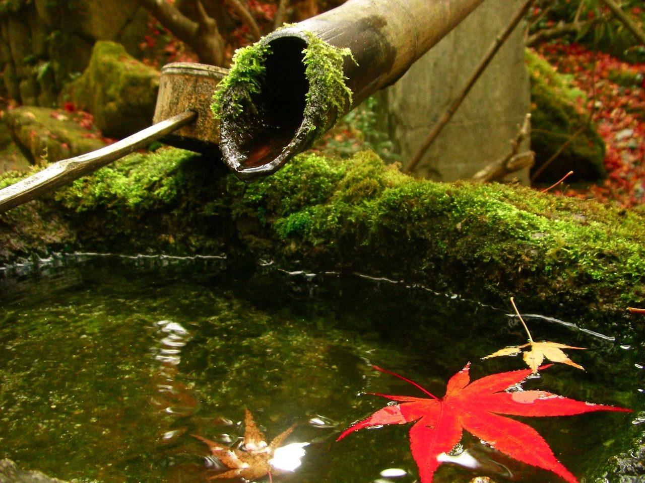 和家人去看京都的楓葉吧
