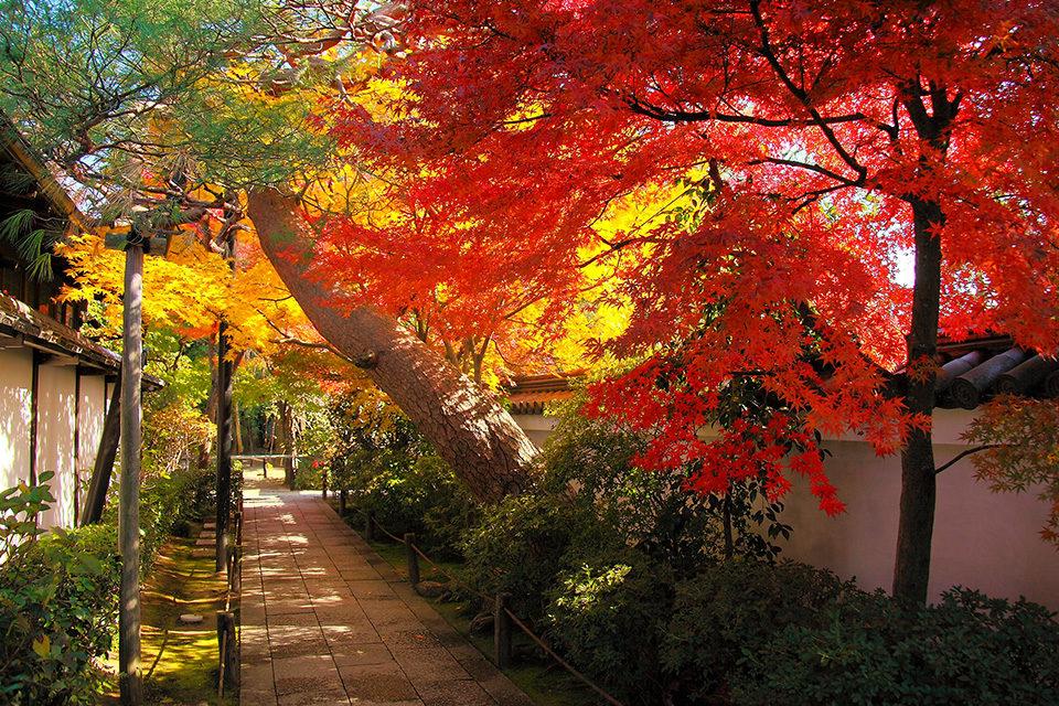 京都的嵯峨野是