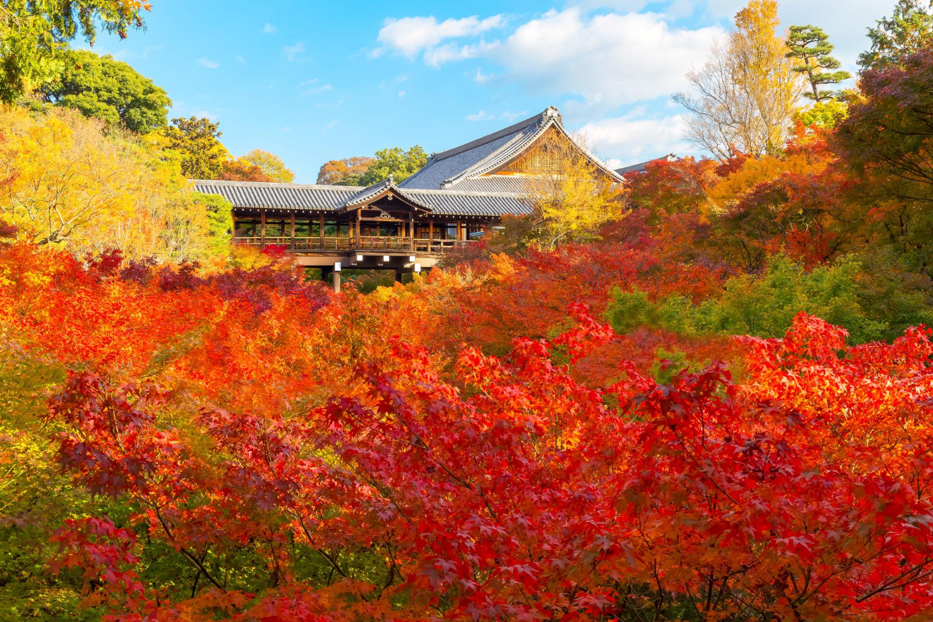 東福寺的楓葉