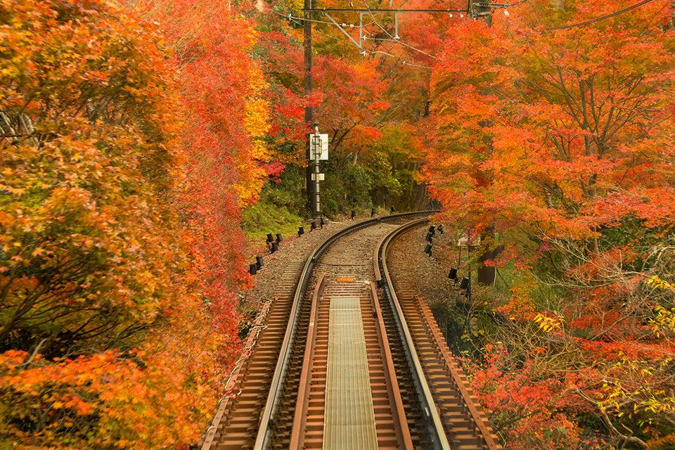 京都新的秋季風物詩