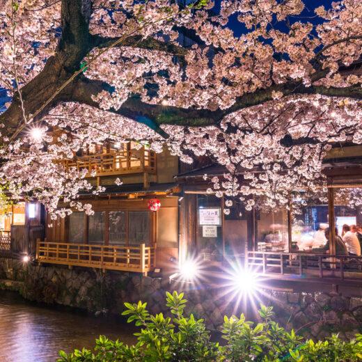 讓京都的櫻花顯得更加美麗的燈光照明