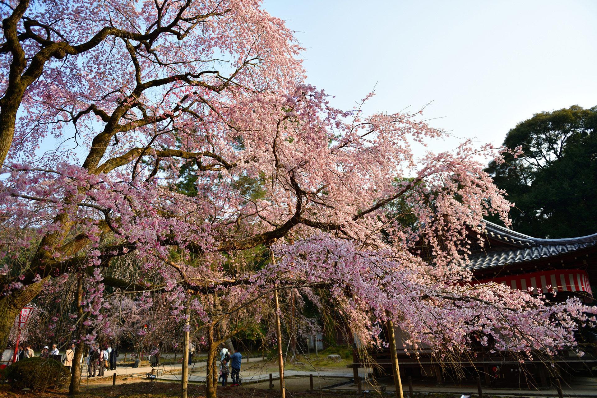 介紹推薦的京都拍照景點