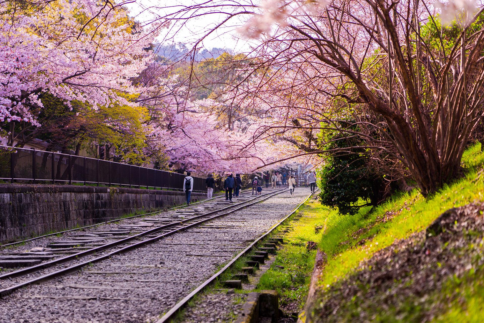 從線路上看到的櫻花景色