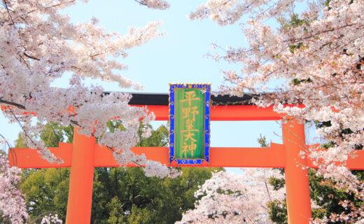 京都平野神社的魅力是