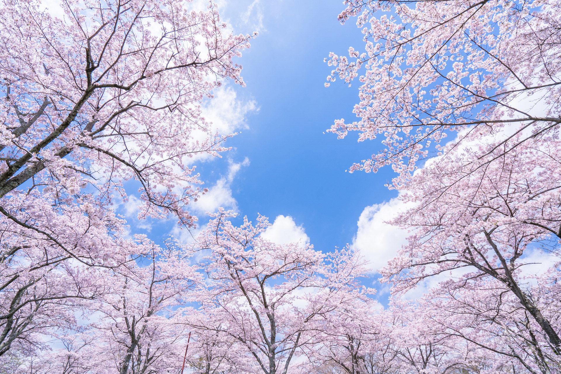 感受一下稍晚的春天怎麼樣?